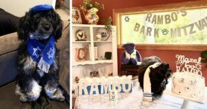 """13-Year-Old Dog Comes Of Age With His """"Bark"""" Mitzvah"""