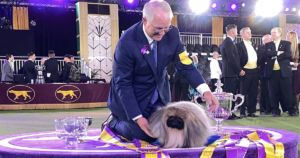 Wasabi The Pekingese Wins Best In Show At Westminster Dog Show