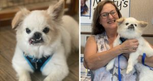 """Quirky Dog Abandoned For Being """"Too Old"""" Now Educates Others"""
